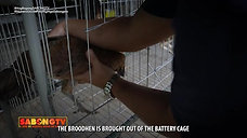 Gamit Gamefarm Feature on Battery Cage August 22, 2021