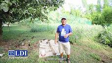 Pag-Alaga sa Cockerels Month 1 to 4 sa Sabong Simple Lang January 25, 2020