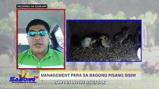 Newly Hatched Chick Care sa Sabong with Vet Ni Juan January 17, 2021