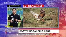 Mga Dapat Gawin Post Wingbanding with Doc John March 21, 2021