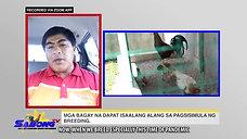 Problema sa Breeding sa Sabong with Doc Nilo October 17, 2020