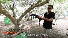 Alagang LDI Panalo To si Bong Colada March 21, 2021