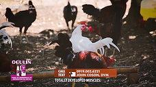 LDI Headlines on Amino Acids for Cockerels May 23, 2021