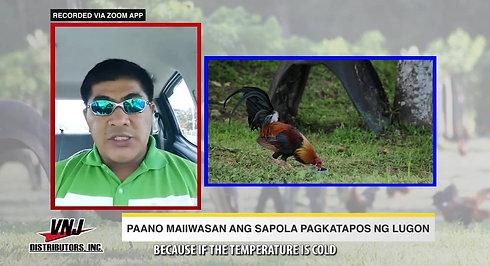 Doc Nilo sa Pag-Iwas sa Sapola sa Corded na Manok Sabong January 31, 2021