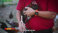 Usapang Chick Marking with Doc Jun Cueto June 27, 2021