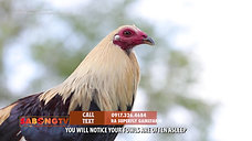 Atty. Ryan Discusses Over-Training sa Gamefowls May 2, 2021