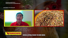 Doc Jayfee on Mixing Grains sa Feeds ng Breeding Materials September 19, 2021