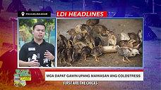 Doc John of LDI Headlines on Cold Stress sa Sabong December 27, 2020