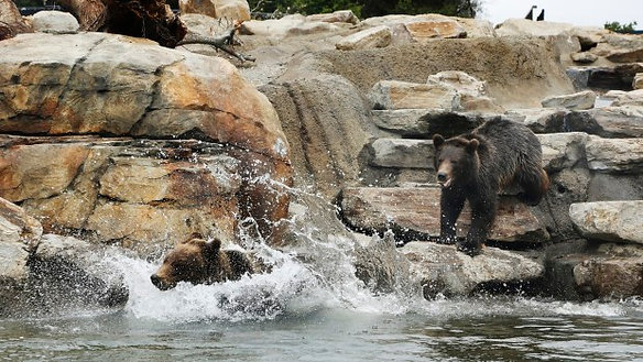The Bear Exhibit at Oakland Zoo