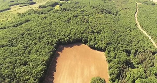 Tourtoirac Forest