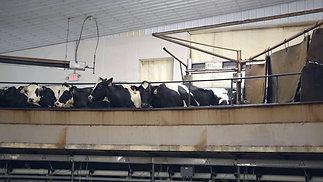 Rosendale Dairy