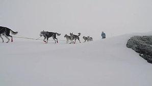 Finnmarksløpet 2016