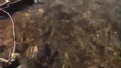 クリスタル動画