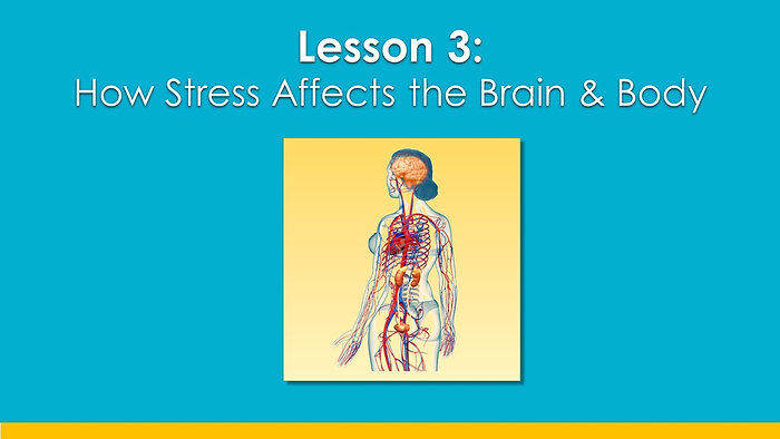 Lesson 3f_Stress & brain_Share