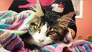 Cat Hydrobath & Brushing