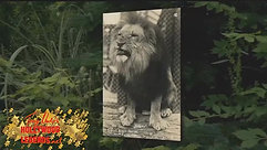 A Visit to Volney Phifer's Farm - Home of LEO the LION
