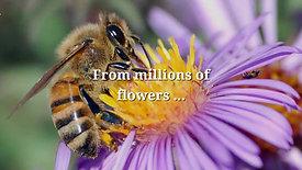 They Make Honey