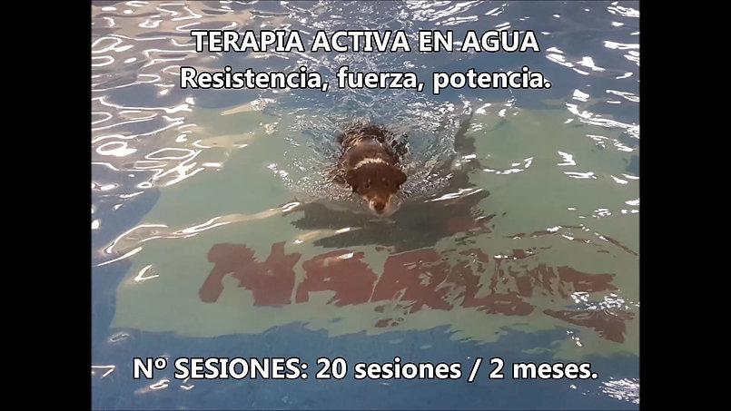 Entrenamiento de Agility con Fisioterapia Deportiva
