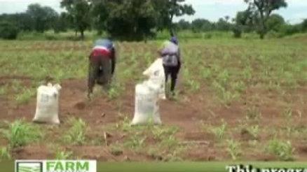Effective Use of Fertilizer (Part 2).mov