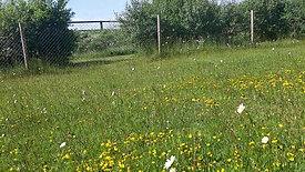 Punchestown Momtessori School School Garden May 2020
