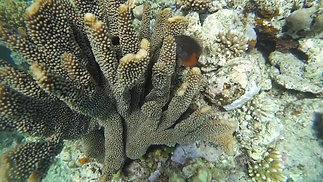 Great Barrier Reef - Diving Video