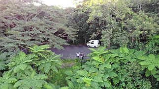 Daintree Forest - Drone Short Video