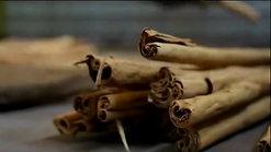 Harvesting True Cinnamon