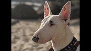 A Doggo Named Roxy