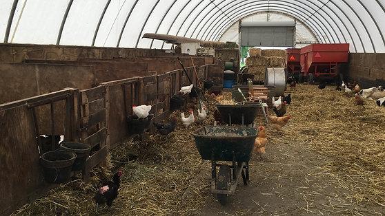 Clover Hill Farm
