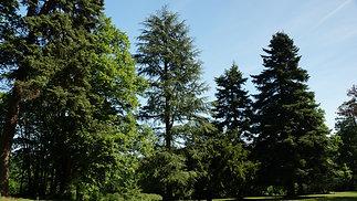 La terrasse et le parc aux arbres centenaires
