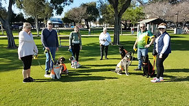 What is the Social Training Pack Walk about?