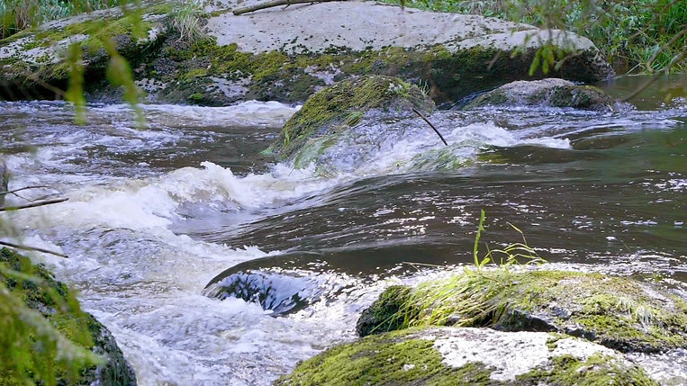 Watershed & Ecohydrology