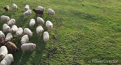 La houblonnière les moutons