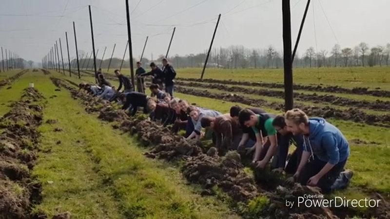 La houblonniière plantation