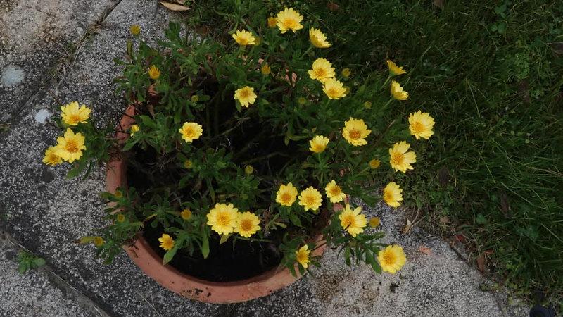 Etienne-T-crépuscule des fleurs