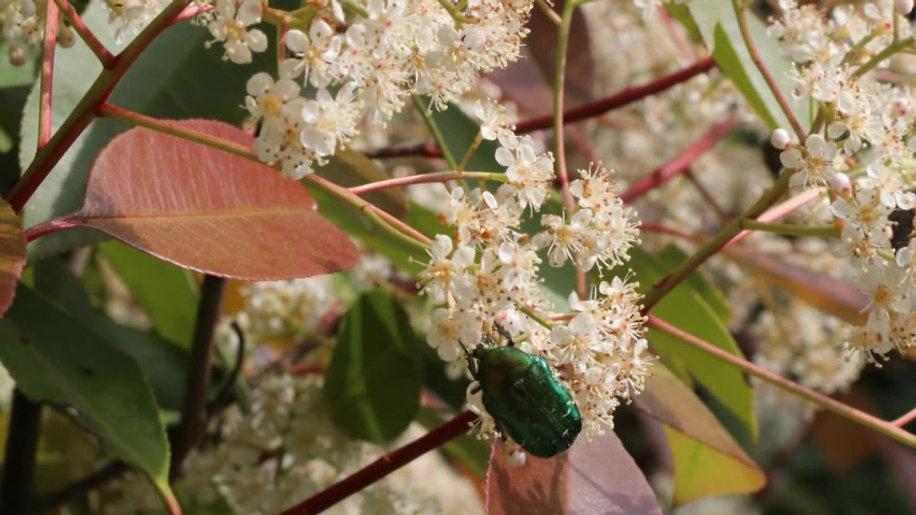 Insectes confinés