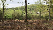 Forestry Mulching at the Farm