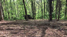 Forestry Mulching Timelapse