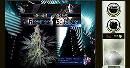 Weed, Business & High Life - Full Show