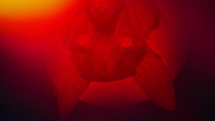 Bloodhound - Michael J Epstein