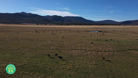 Five Dot Ranch_Ranch 2min