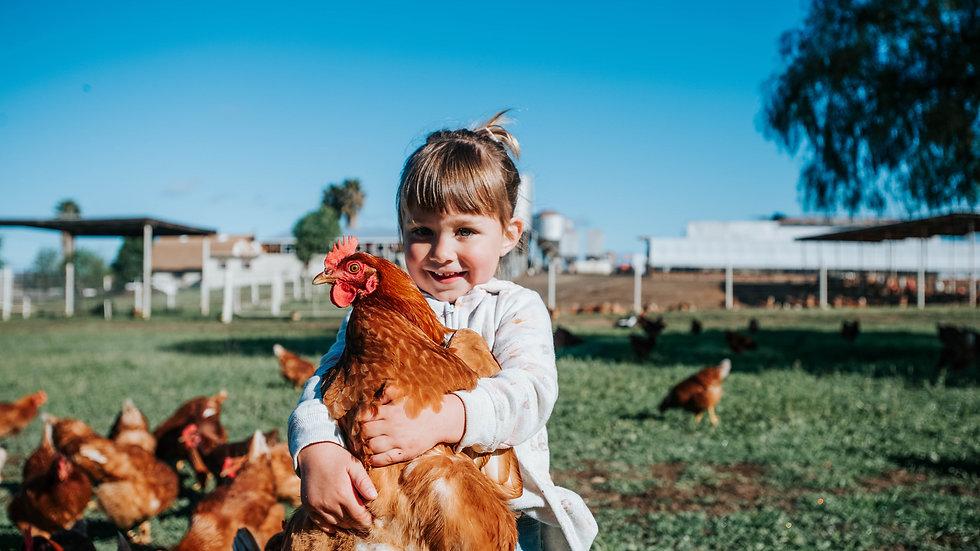 Happy Hens Storybit