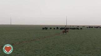Irlbeck Farms