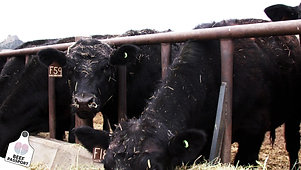 Beef Passport powered by IMI Global