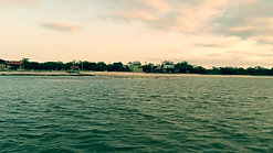 Soaring Sea Gulls