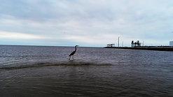 Heron Flier