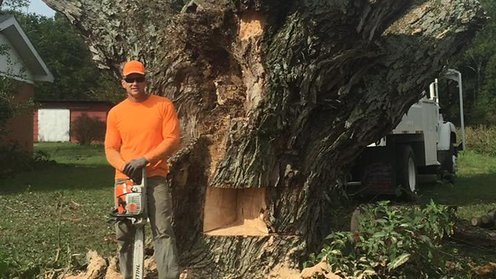 White Oak Removal - Corydon, IN