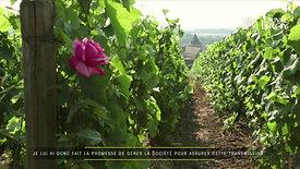 Champagne Duval-Leroy - Carol