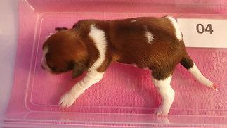 Puppy's 7 dagen