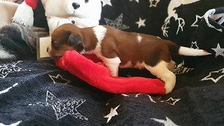 Puppy's 14 dagen